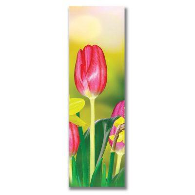 Pink Tulip 288*