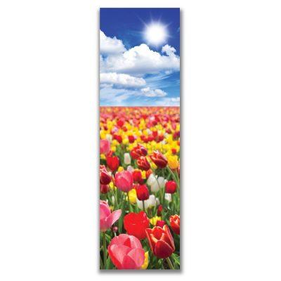 Red Tulip Field 289*